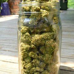 a94729571a726bd61140b234e7210238--medical-marijuana-weed
